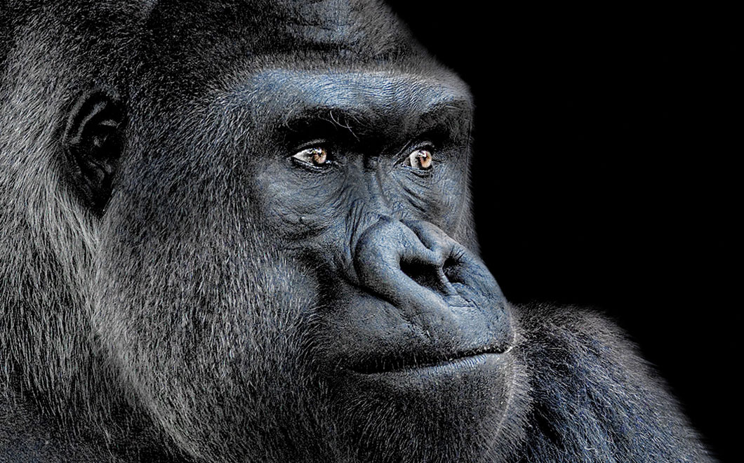 Omaha Zoo Foundation - Zooporter | Agent