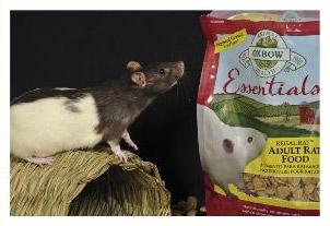 General Rat Information